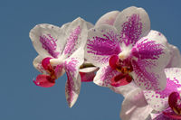 1 BA Rote Orchideen.jpg