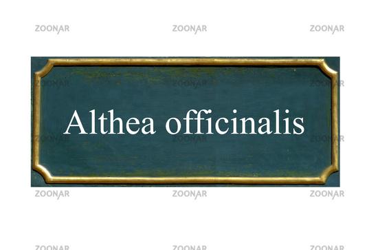 shield althea officinalis