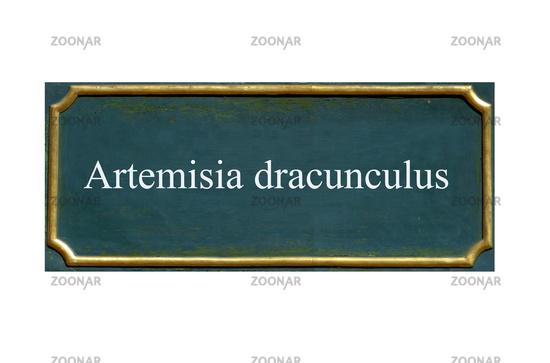 shield artemisia dracunculus