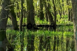 Landschaft am Dümmer See-136