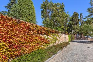 Autumnal ivy on brick wall.