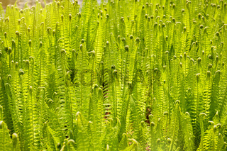 Fern foliage meadow abstract
