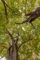 trees at autumn