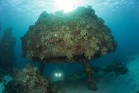 Taucher unter Jacques Cousteau Unterwasserstation Precontinent II, Sudan