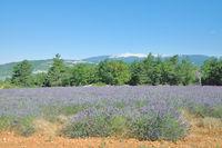 F--Provence--Blick auf den Mont Ventoux.jpg