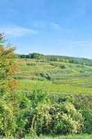 D--Schwarzwald--Weinbauterassen am Kaiserstuhl.jpg