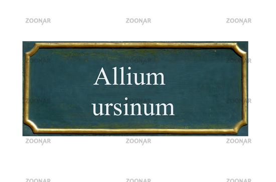 shield allium ursinum