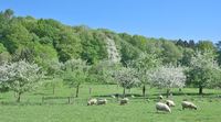 Springtime in Bergisches Land near Solingen,Germany