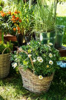 Outdoor flower pots for small garden