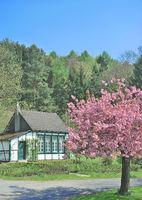 D--Bergisches land--Frühling.jpg