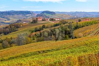 Vineyards of Piedmont in autumn.