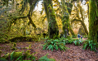 The Hoh Rainforest of Olympic National Park in Washington State.