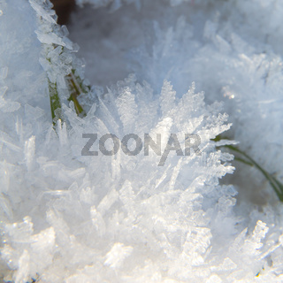 Grashalm hinter Eiskristallen