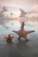Two starfish on summer beach