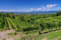 Friaul Weinberge - Friaul vineyards 01