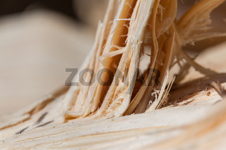 Bruchkante Holz