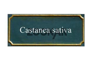 schild edelkastanie castanea sativa
