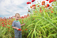 Small boy in field with red poppies