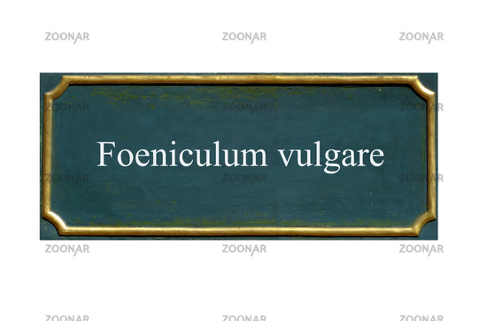 shield foeniculum vulgare