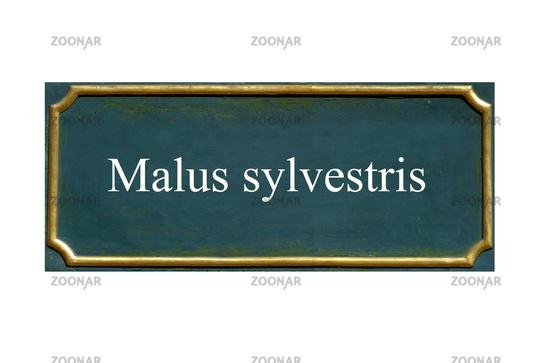 shield Malus sylvestris