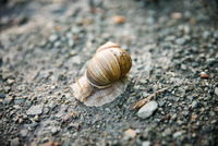 Snail on the dirt road