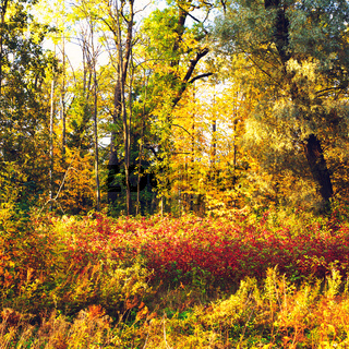 Autumn Mixed Forest