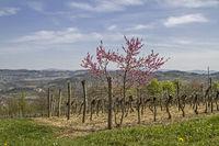 Frühling in Istrien