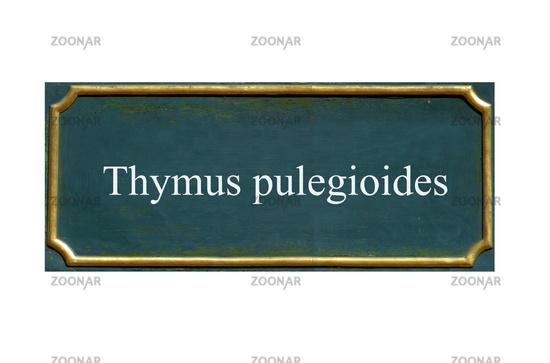 shield thymus pulegioides
