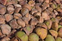 Pile of broken coconut husks