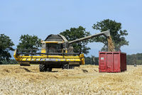 Combine Harvester unbloading winter wheat