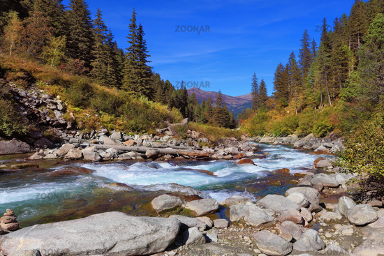 Rapid  stream of coniferous forests