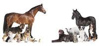 many animals Collage