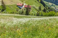 Summer meadow on a steep slope