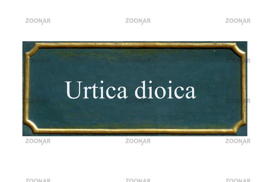 shield urtica dioica