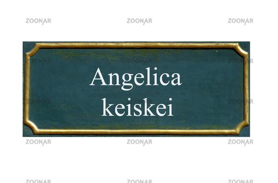 shield angelica keiskei