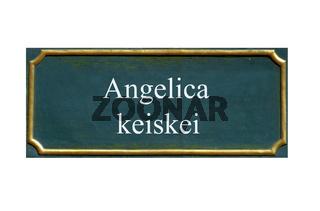 schild Ashitaba, angelica keiskei