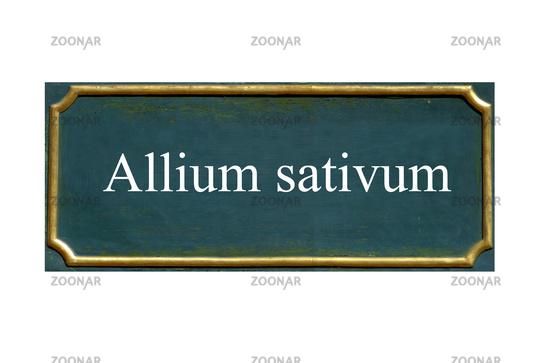 shield allium sativum