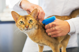 Microchip implant by cat