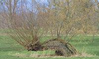D--NRW--Naturschutzgebiet Urdenbacher Kämpen2.jpg