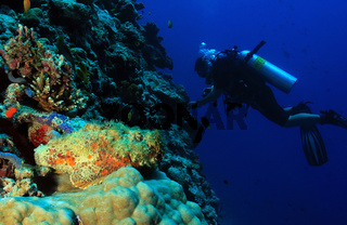 Stonefish and Diver