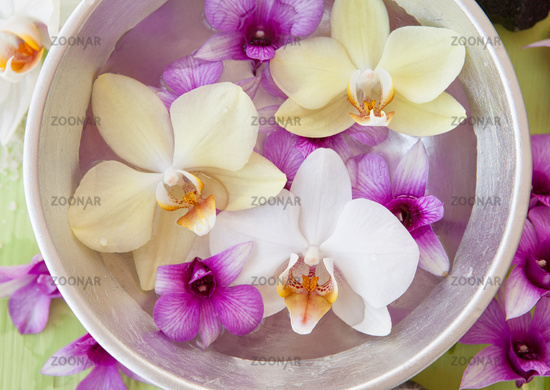 Fresh orchids