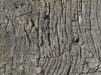 Very old weathered wood texture