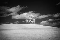 lonely tree with infrared filter