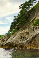Seascape with rocks and groves of relict pine tree.