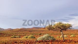 Abendlicht auf der Landschaft Palmwag, evening light at landscape of Namibia, Palmwag concession