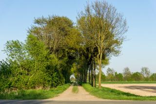 Landschaft am Dümmer See-59