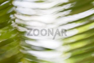 blurred fern or palm leaf for background