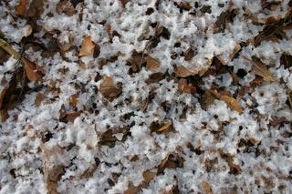 Verschneites Laub