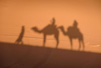 Camel shadows on Sahara Desert sand in Morocco.