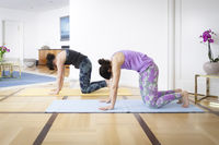 two women doing yoga at home cat pose